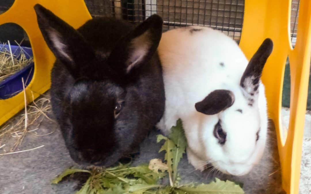 Joanna and Merlin & Daisy, VIC
