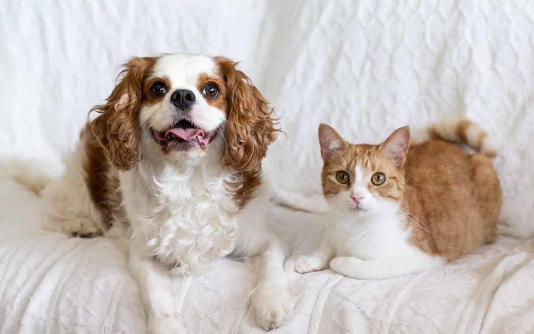 Jetpets Companion Animal Rescue Awards 2018 Finalists!