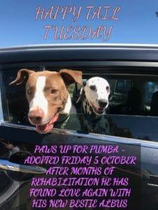 The story of Pumba Jetpets Companion Animal Rescue Awards 2018