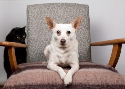 Rescue pets Velvet and Luna. Photo: Jo Lyons Photography
