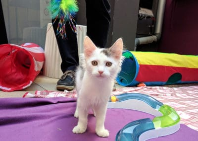 Rescue kitten at Launch event held at the Cat Protection Society NSW. Photo Caroline Zambrano